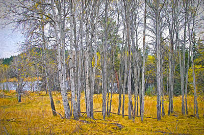 Aspen Tree Grove Digital Oil Painting Poster by Sharon Talson