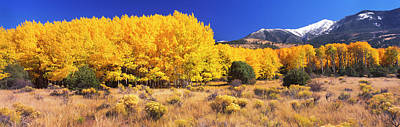 Aspen Tree With Sangre De Cristo Poster by Panoramic Images