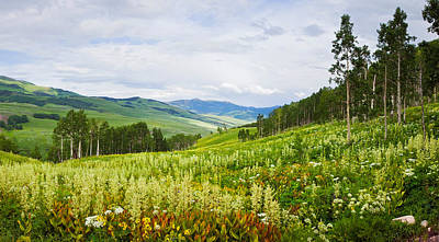 Aspen Trees And Wildflowers Poster by Panoramic Images
