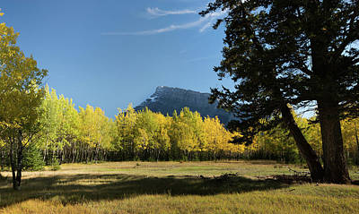 Aspen Trees In Autumn, Mount Rundle Poster