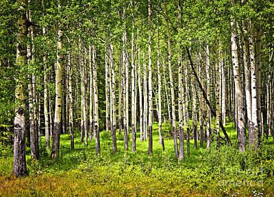 Aspen Trees In Banff National Park Poster by Elena Elisseeva