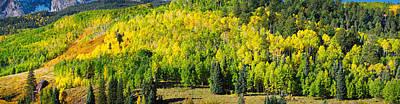 Aspen Trees On Mountain, Mount Poster