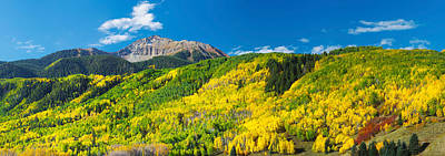 Aspen Trees With Mountain Poster