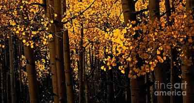 Aspen Woods Poster