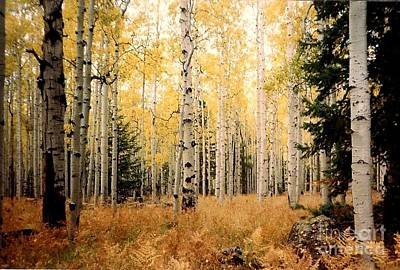 Poster featuring the photograph Aspens by Fred Wilson
