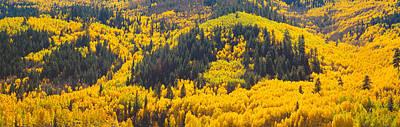 Aspens In Autumn Near Rico, Colorado Poster