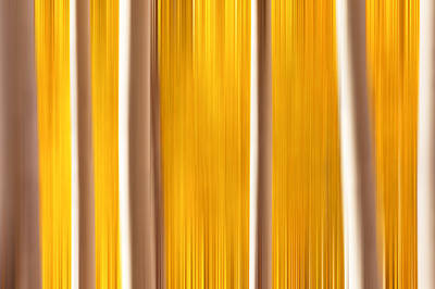 Aspens True Colors Poster by Darren  White