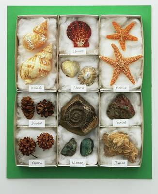 Assorted Sea Shells Displayed In A Tray Poster