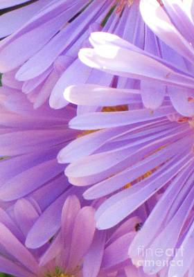 Poster featuring the photograph Aster Petals by Michele Penner
