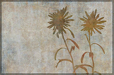 Asters Shadow Play Poster by Cora Niele