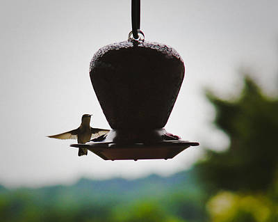 Poster featuring the photograph At The Feeder by Debra Crank