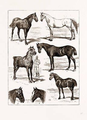 At The Islington Horse Show, London, Uk, 1875 1 Poster by Litz Collection
