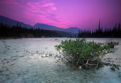 Athabasca River Bush At Sunset Poster by Cale Best