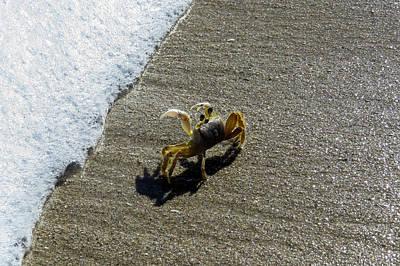 Atlantic Ghost Crab Poster