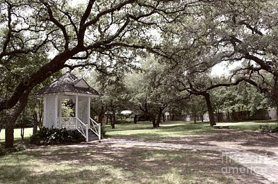 Austin Texas Southern Garden - Luther Fine Art Poster by Luther Fine Art