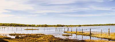 Australian Mangrove Landscape Panorama Poster by Jorgo Photography - Wall Art Gallery