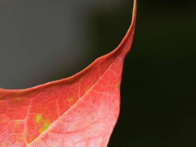 Poster featuring the photograph Autumn 2 by Tara Lynn