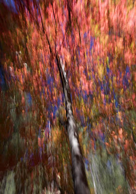 Autumn Abstract Poster by Sue Cullumber