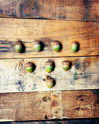 Poster featuring the photograph Autumn Acorns by Kim Fearheiley