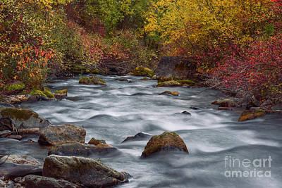 Autumn Along Palisades Creek In Idaho Poster