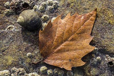 Autumn Along The Coast Poster