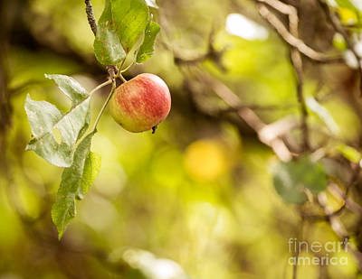 Autumn Apple Poster