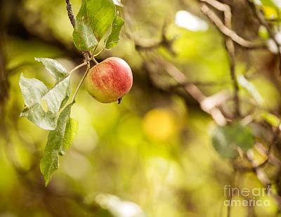Autumn Apple Poster by Matt Malloy