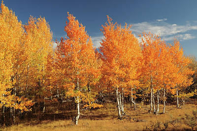 Autumn Aspens, Steens Mountain Poster by Michel Hersen