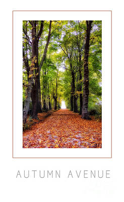 Autumn Avenue Poster Poster by Mike Nellums
