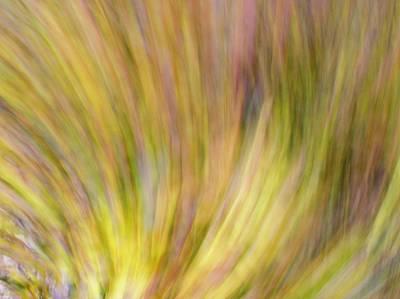 Autumn Azaleas 4 Poster