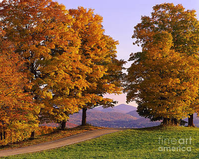 Autumn Backroad View Poster