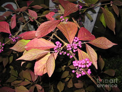 Autumn Beauty Berry Poster by Marlene Rose Besso