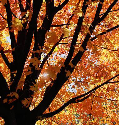 Autumn Beauty Poster by Kim Hojnacki