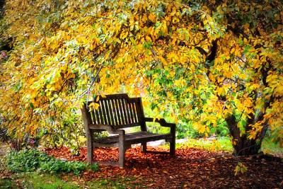 Autumn Bench In The Garden  Poster by Lynn Bauer