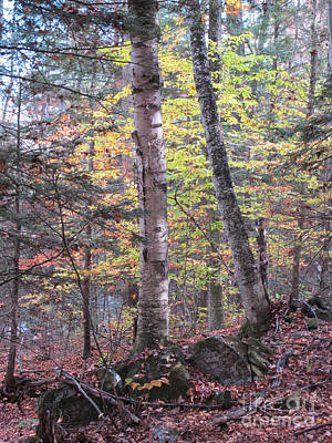 Autumn Birch Poster by Linda Marcille