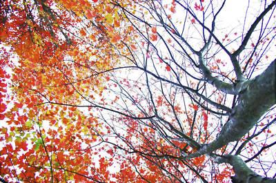 Autumn Bleeds Poster