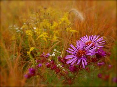 Autumn Blush Poster by Tim Good