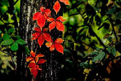 Autumn Climber Poster