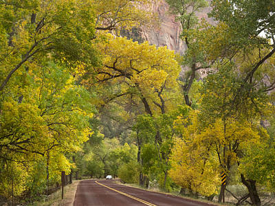 Autumn Color Along Zion Canyon Scenic Drive In Zion Np-ut Poster