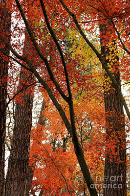 Autumn Color Revival Poster by Carol Groenen