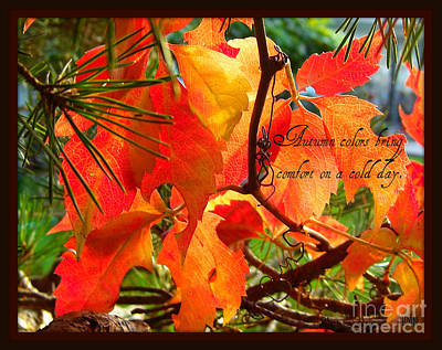 Poster featuring the photograph Autumn Colors by Heidi Manly