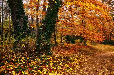 Autumn Colors Poster by Oleksandr Maistrenko