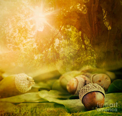 Autumn Design Poster by Mythja  Photography