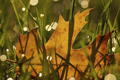 Autumn Dew Poster