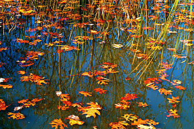 Poster featuring the photograph Autumn  Floating by Peggy Franz