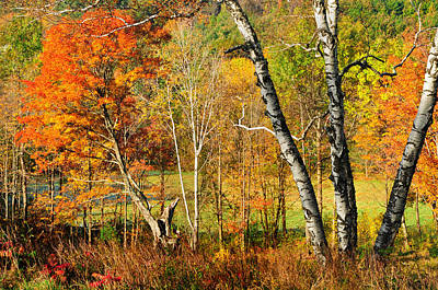Autumn Forest Scene - Litchfield Hills Poster by Thomas Schoeller