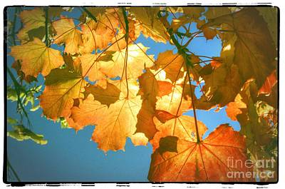Autumn Found Poster by Spikey Mouse Photography