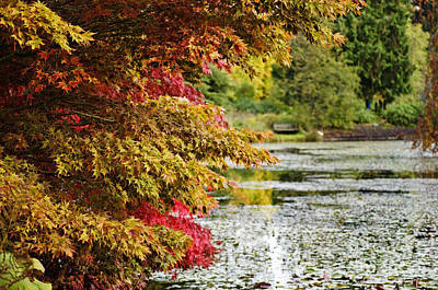 Poster featuring the photograph Autumn Glory By The Pond by Maria Janicki