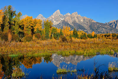 Autumn Glory In The Tetons Poster