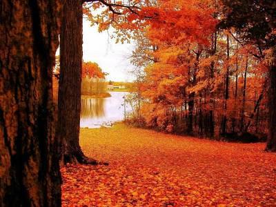 Autumn Glow Poster